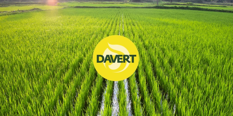 Read more about the article DAVERT – Das Reis-Projekt: Kotwa.